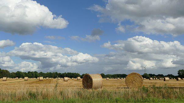 Hay, Harvest, Dried Grass, Straw Bales, Winter Feed