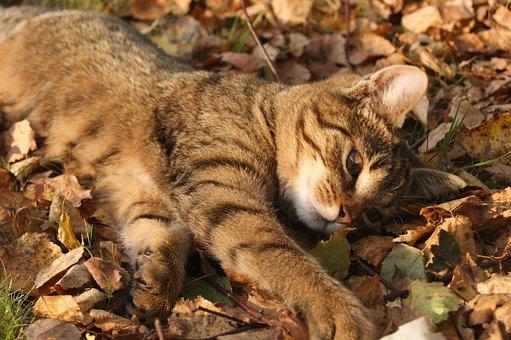 Cat, Autumn, Foliage, Autumn Gold