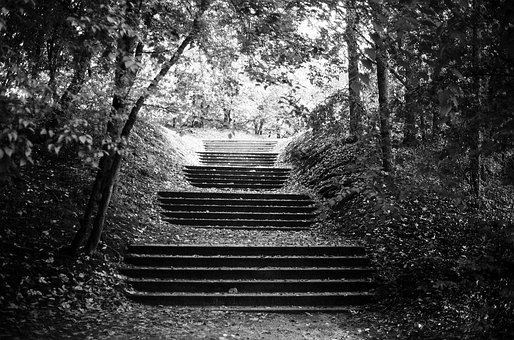 Stairs, Forest, Mystery, Nature, Landscape, Park, Wood