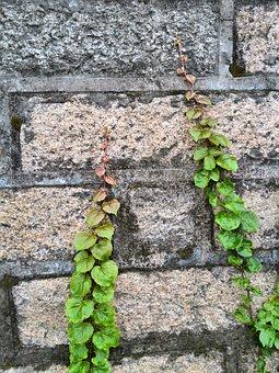 Climbing Imaginary, Grass, Wall, Flower Vine