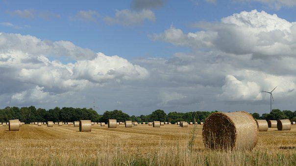 Hay, Harvest, Hay Bales, Dried Grass, Agriculture