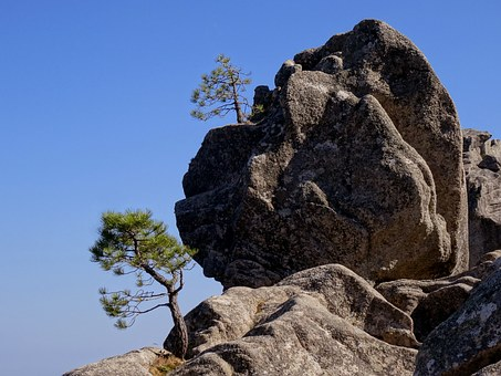 Corsican, Rock, Nature, Hiking, Tree