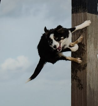 Dog Jumps On Pole, Jumping Dog, Funny Charisma