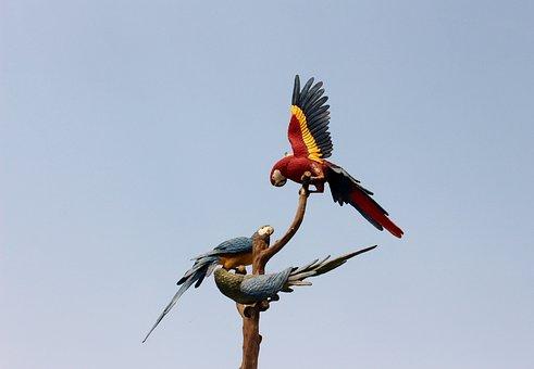 Parrots, Tenerife, Loropark, Logo, Color, Art