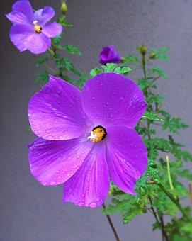 Flowers, Purple, Red Purple, Water, Rain, Drop Of Water