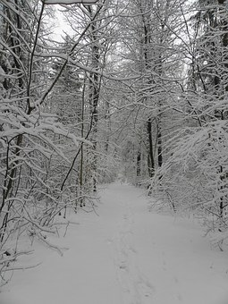 Snow, Winter, Branches, Wintry, White, Cold, Snowy