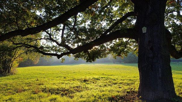 Park, Meadow, Tree, Nature, Autumn, Rest, Landscape