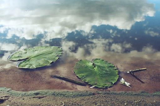 Pond Leaves, Water, Mirroring, Clouds, Beach, Sand