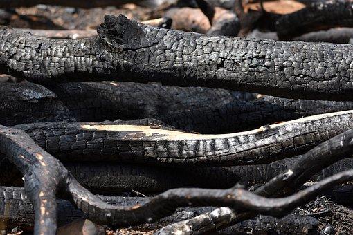 Fire, Charred, Wood, Burned Stuff, Ash