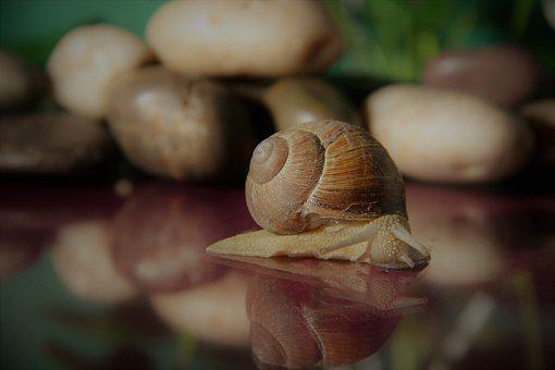 Snail, Shell, Crawl, Mollusk, Nature, Animal, Slowly