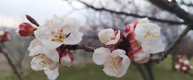 Portraite, Flower, Garden, Spring, Tree, Pink, Red