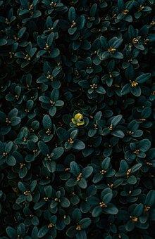 Plants, Contrast, Color, Nature
