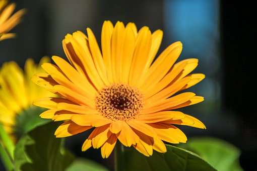 Flower, Yellow, Pl, Spring, Nature, Bloom, Flora