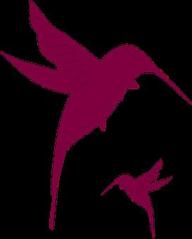 Hummingbirds, Purple, Flying, Nature, Summer, Humming