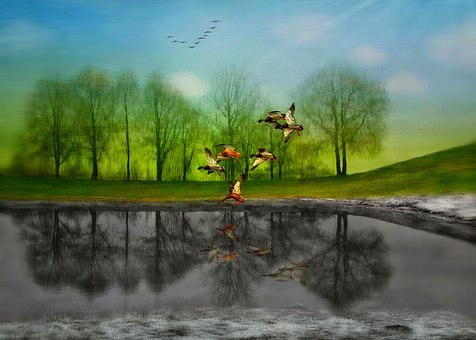 Spring, Stand By, Dreams, Reflection, Nature