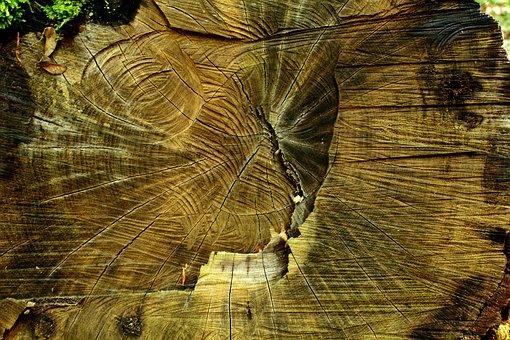 Wood, Strain, Tree, Deforestation, Nature, Sawing