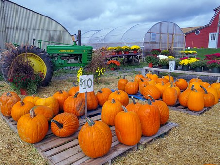 Farm, Pumpkins, Pumpkin Farm, Squash, Orange, October