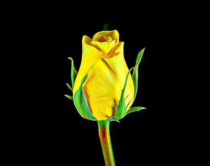 Yellow Rose, Rose, Flower, Yellow, Nature, Bloom