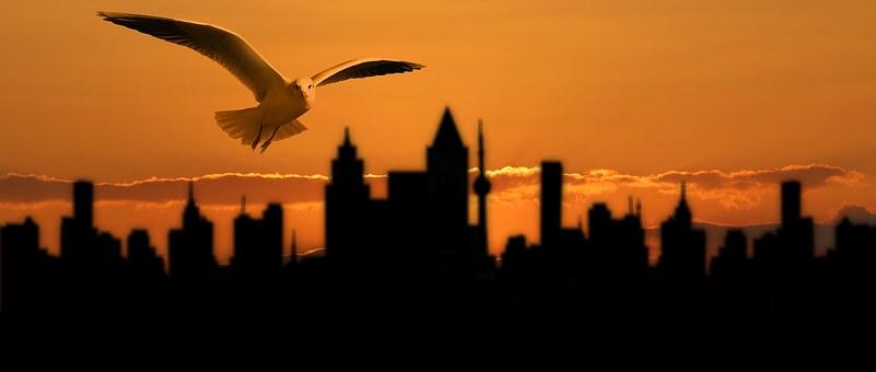 Banner, Header, Gull, Bird, City, Silhouette, Skyline