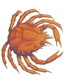 Crab, Vintage, James Sowerby, Fauna, Marine, Seafood