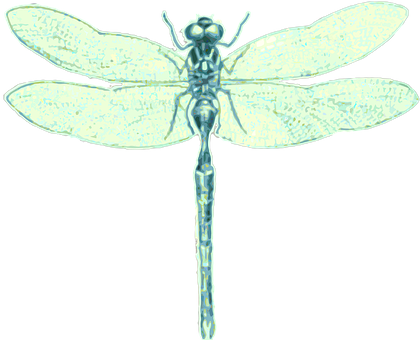 Dragonfly, Order Odonata, Insect, Green Dragonfly