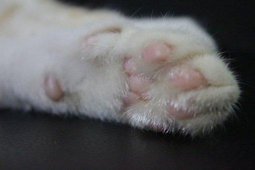 Cat, Animal, Kitten, Pet, Hand, Leg, Paw, Cute, Kitty