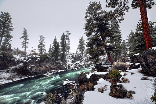 Oregon, Bend, River, Winter, Forest, Pine, Tree