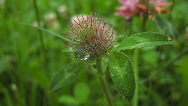 Raindrop, Plant, Rain, Nature, Drop Of Water, Flower
