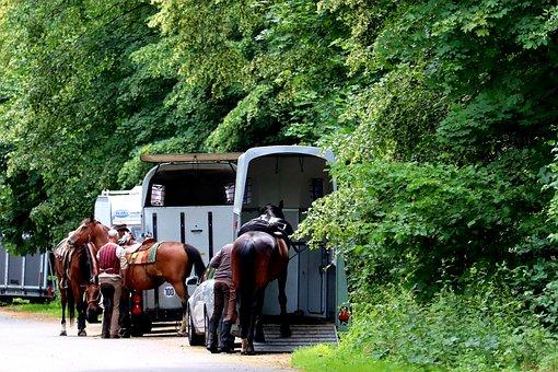 Reiter, Sport, Horse Trailer, Horses