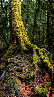 Tree, Moss, Forest, Rainforest, Nature, Green