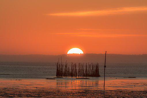 Ocean, Bird, Twilight, Landscape