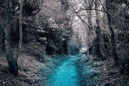 Path, Tree, Nature, Trees, Landscape, Fall, Bridge