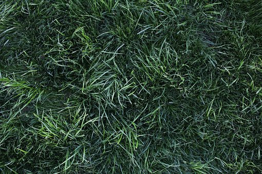 Grass, Lush, Green, Growth, Lawn, Nature, Plant, Garden