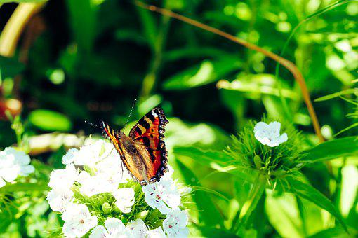 Butterfly, Insect, Wings, Nature, Summer, Flower, White