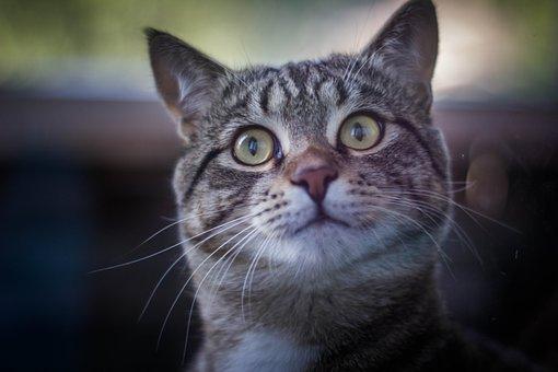 Cat, House, Pet, Feline
