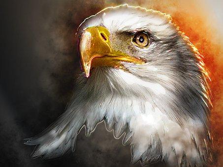 Adler, White Tailed Eagle, Bald Eagle, Bird Of Prey