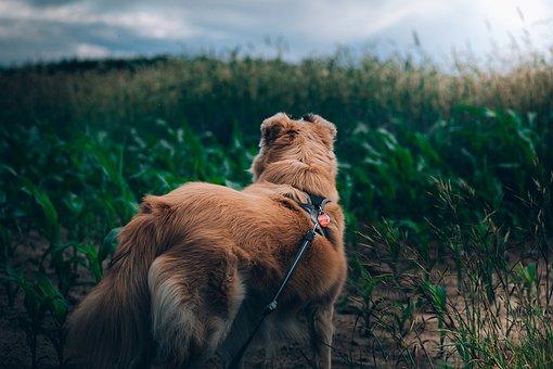 Dog, Doggy, Friend, Same, Lonely, Animal, Nostalgia
