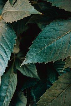 Leaf, Gree, Moody, Jungle, Liana, Rainforest, Leafs
