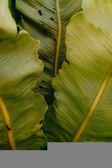 Plant, Gree, Patron, Minimal, Nature, Summer, Jungle