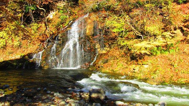 Autumn, Maple, Maple Leaf, Autumnal Leaves