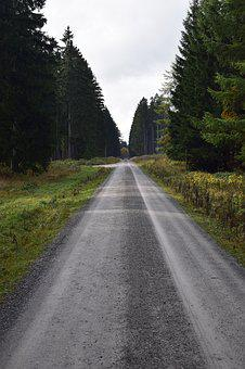 Dirt Track, Forest, Away, Nature, Autumn, Nature Trail