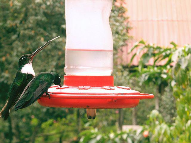 Hummingbird, Bird, Beautiful, Sings, Close, Animal