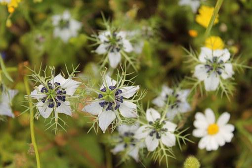 Salento, Flowers, Magliano