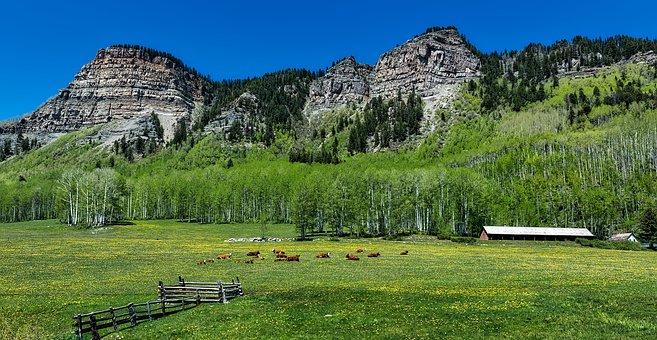 Colorado, Cattle, Cows, Herd, Ranch, Farm, Mountains