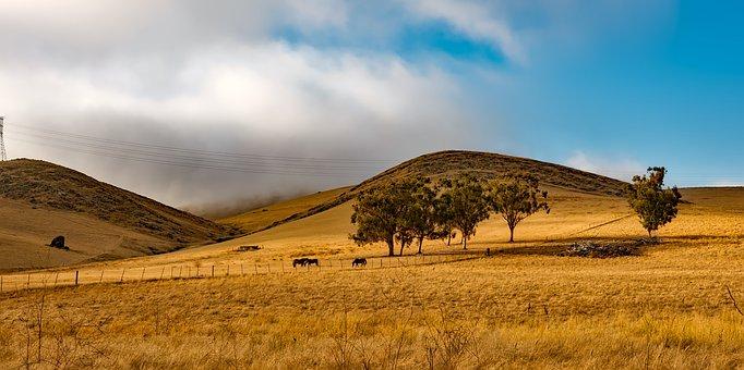 California, Landscape, Scenic, Hills, Farm, Ranch
