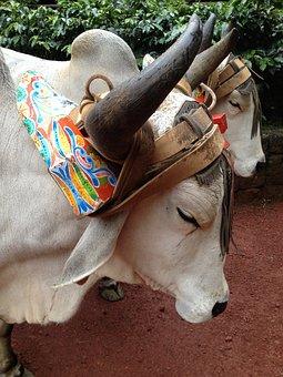 Buffalo, Animal, Cart, Horn, Livestock