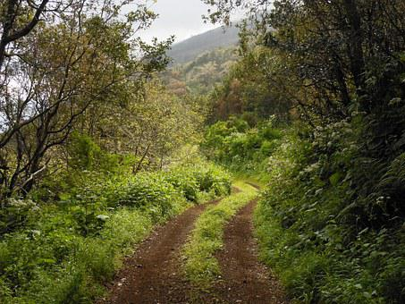 Lane, Away, Landscape, Green, Canary Islands, Nature