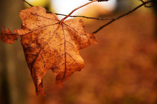 Leaf, Nature, Autumn, Leaves In The Autumn, Transience
