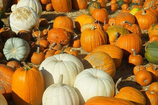 Pumpkins, Pumpkin Patch, Halloween, Patch, Autumn