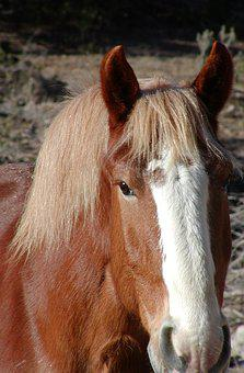 Horse, Equine, Equestrian, Ranch, Rural, Animal, Young